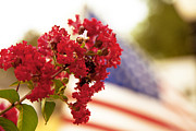 Floral Photographs Photo Metal Prints - Crapemyrtle and Patriotic proud Metal Print by Toni Hopper
