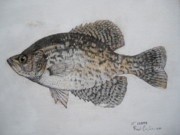 Crappie Framed Prints - Crappie Framed Print by Robert Cunningham