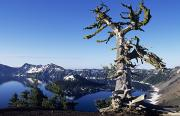 Snag Framed Prints - Crater Lake Framed Print by Greg Vaughn - Printscapes