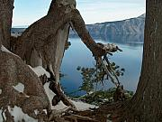 Crater Lake View Framed Prints - Crater Lake Framed Print by Lori Seaman