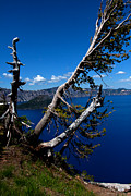 Mount Mazama Posters - Crater Lake Wizard Dead Tree 1 Poster by BuffaloWorks Photography