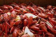Crawfish Boil Framed Prints - Crawfish Framed Print by Cajun Dee Photography