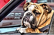 Georgia Bulldog Prints - Crazy Atlanta Drivers Print by Kenneth Mucke