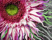 Floral Mixed Media Metal Prints - Crazy Daisy Metal Print by Christopher Beikmann