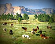 Diana Prickett Metal Prints - Crazy Horses Metal Print by Diana Prickett