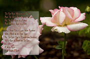 Barbara Middleton Metal Prints - Cream White Rosebud with Poem Metal Print by Barbara Middleton