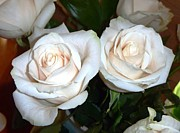 Rose Photos - Creamy Roses I by Alys Caviness-Gober