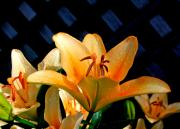 Lillies Digital Art Prints - Creation-2 Print by Robert Pearson