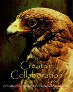 Collaboration Posters - Creative Collaboration Group . Hawk Poster by Wingsdomain Art and Photography