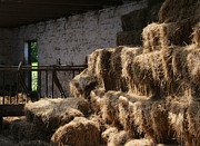 Hay Bales Photos - Creature Comforts by Odd Jeppesen