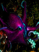 Octopus Prints - Creatures of The Deep - The Octopus - Electric - Violet Print by Wingsdomain Art and Photography