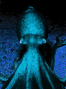 Octopus Prints - Creatures of The Deep - The Octopus - v4 - Cyan Print by Wingsdomain Art and Photography