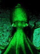 Octopus Prints - Creatures of The Deep - The Octopus - v4 - Green Print by Wingsdomain Art and Photography