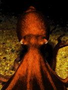 Octopus Prints - Creatures of The Deep - The Octopus - v4 - Orange Print by Wingsdomain Art and Photography