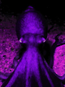 Octopus Prints - Creatures of The Deep - The Octopus - v4 - Purple Print by Wingsdomain Art and Photography