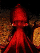 Octopus Prints - Creatures of The Deep - The Octopus - v4 - Red Print by Wingsdomain Art and Photography