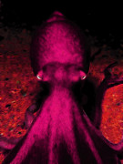 Octopus Prints - Creatures of The Deep - The Octopus - v4 - Violet Print by Wingsdomain Art and Photography