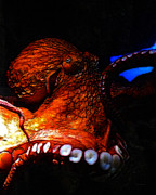 Marine Mollusc Digital Art Prints - Creatures of The Deep - The Octopus - v6 - Orange Print by Wingsdomain Art and Photography