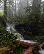 Forest Photos - Creek in the Mist by Mike Reid