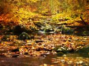 Autumn Photographs Photos - Creek In The Woods by Kathy Jennings