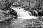 Colorado Prints Prints - Creek Merge Waterfall in Black and White Print by James Bo Insogna