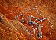 Tree Roots Photo Prints - Creepy Crawly Print by Inge Johnsson