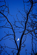 Stock Images Prints - Crescent Moon in the V of Trees Print by James Bo Insogna
