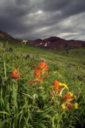 Michael Grasseschi - Crested Butte Flower