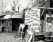 Potatoes Posters - Crickets Bait Shop Poster by Scott Pellegrin
