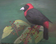 Red And Black Berries Framed Prints - Crimson-Collared Tanager Framed Print by Lourdes Torres