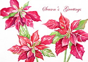 Poinsettias Paintings - Crimson Poinsettias by Deborah Ronglien