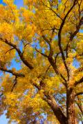 Striking Photography Metal Prints - Crisp Autumn Day Metal Print by James Bo Insogna
