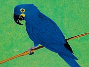 Macaw Drawings - Critically endangered  by Maureen Beaudet