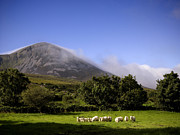 Patrick Framed Prints - Croagh Patrick Mountain In County Mayo Framed Print by Chris Hill