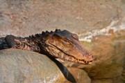 Rick  Monyahan - Croc