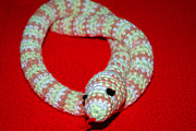 Hand Made Art - Crochet Snake in Red by LeeAnn McLaneGoetz McLaneGoetzStudioLLCcom