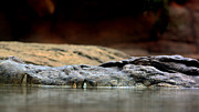 Blending Photos - Crocodile by Douglas Clulow