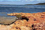 Beach Scenes Photos - Crocodile Rock  Millers Point WA by Tony Brown