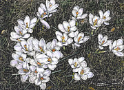 Robert Goudreau - Crocus FLowers
