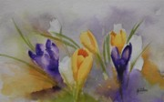 Yellow Crocus Posters - Crocus Poster by Gretchen Bjornson