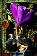 March Photos - Crocus in a Bottle by Chris Berry