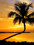 Beach Sunsets Photo Prints - Crooked Palm Print by Karen Wiles