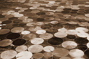 Geometric Shapes Posters - Crop Circles in Sepia - Digital Art Poster by Carol Groenen