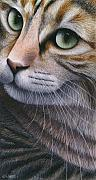 Cat Artwork Framed Prints - Cropped Cat 2 Framed Print by Carol Wilson