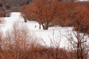 Salt Lake City Photos - Crosscountry Skier by Utah Images