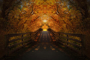 Autumn. Fall Colors - Crossing Over - Color by Anthony Rego