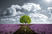 Out Digital Art Originals - Crossroad in lavender meadow by Giordano Aita