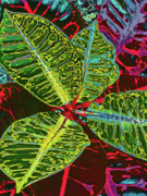 Kerri Ligatich Prints - Croton - Deep Green Print by Kerri Ligatich