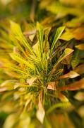 Selective Soft Focus Prints - Croton Blur Print by Ron Dahlquist - Printscapes