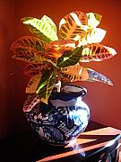 Potted Plant Posters - Croton in Talavera Pot Poster by Amy Vangsgard